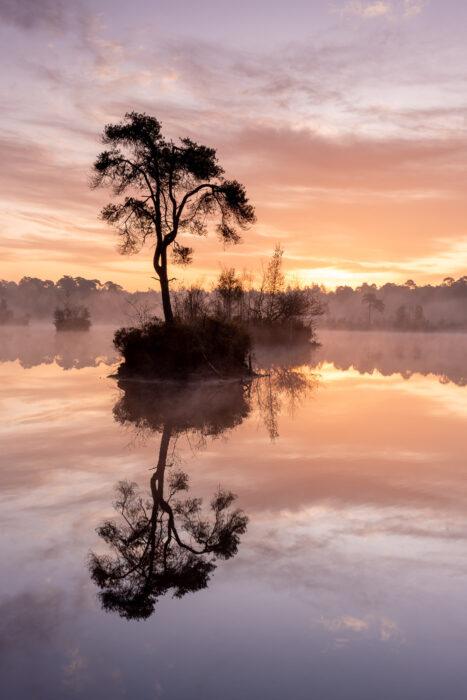 Silhouet van een boompje op een eilandje in het water.