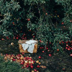 """""""De appel valt niet ver van de boom."""""""