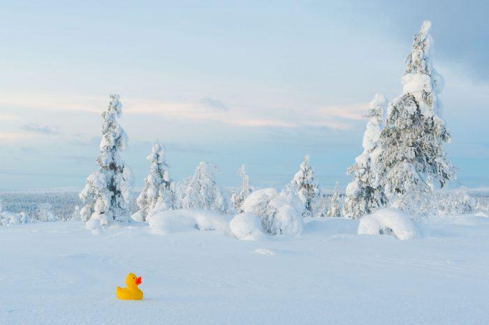 Het gele badeendje valt goed op in het witte landschap.