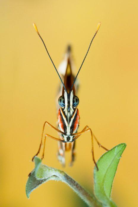 Bewerkte foto van de vlinder (eindresultaat)