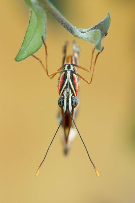 Onbewerkte foto van de vlinder