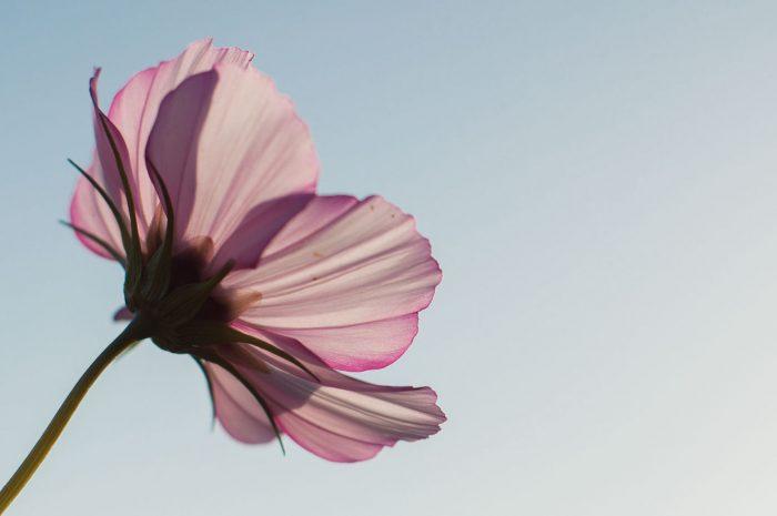 Ik word blij van: een strak blauwe lucht en een mooie bloem!