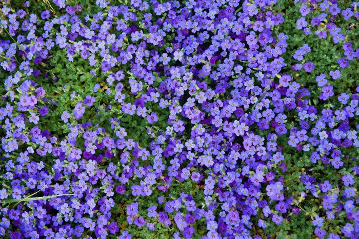 Bloemen van bovenaf fotograferen
