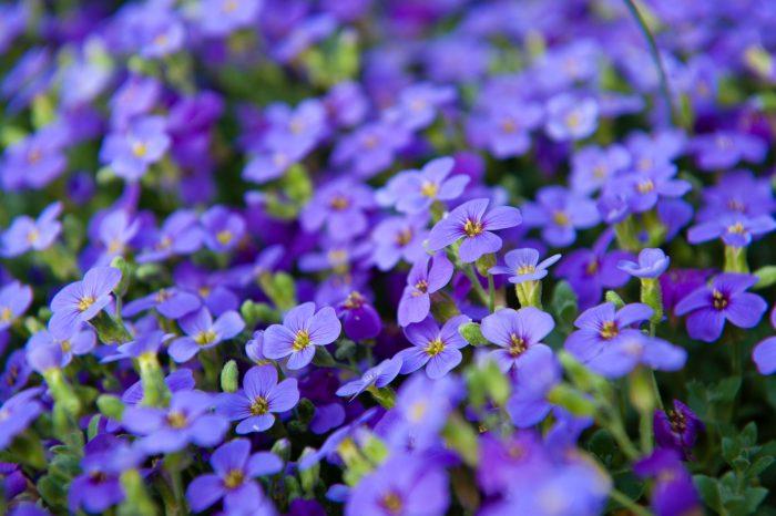 Bloemen fotograferen