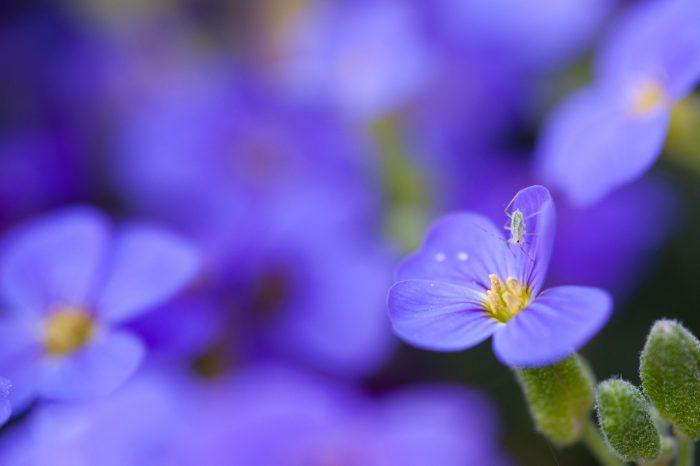 Insect bij bloemenfoto's