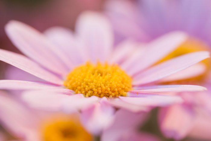 Scherpte bij bloemenfoto's