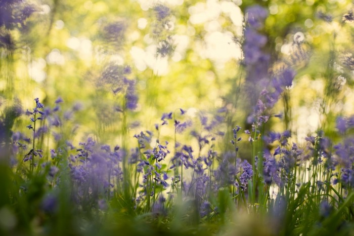 Bij deze foto is er niet alleen ingezoomd, ook is de camera tussen de bloemen geplaatst. Je krijgt zo echt het gevoel dat je tussen de bloemen door spiekt.