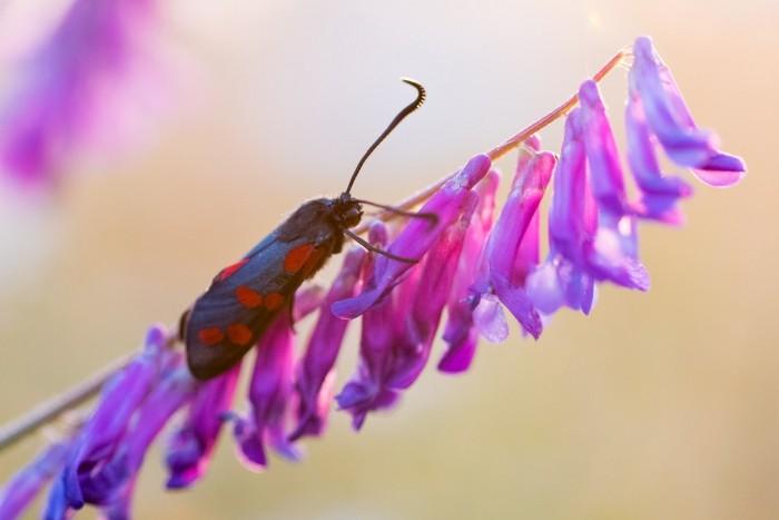 Hoe deze vlinder en bloem heten, weet ik niet ;)