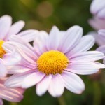 Bloemen fotograferen: 11 tips