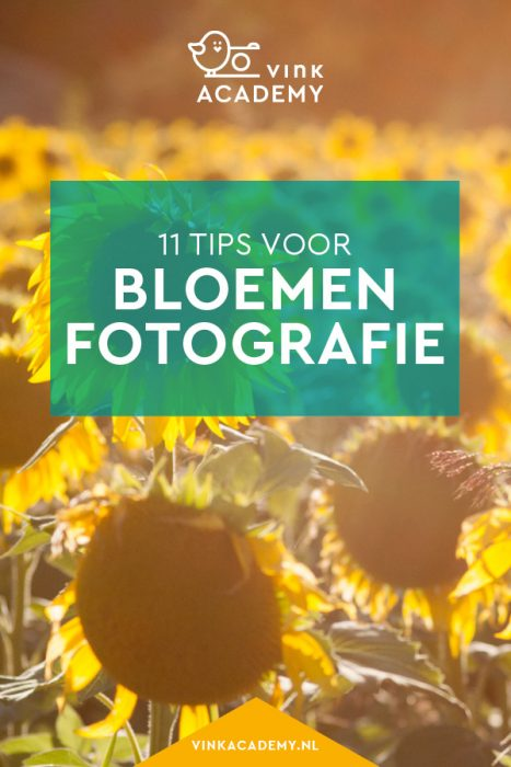 Fotografietips voor zonnebloemen