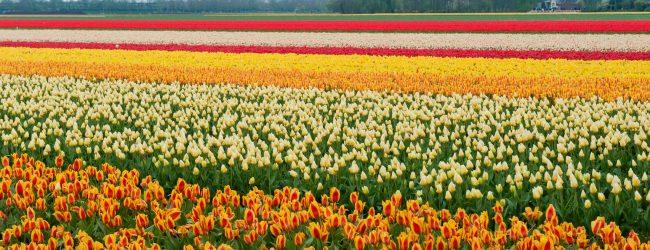 Fotografie Challenge Mei: Typisch Nederlands