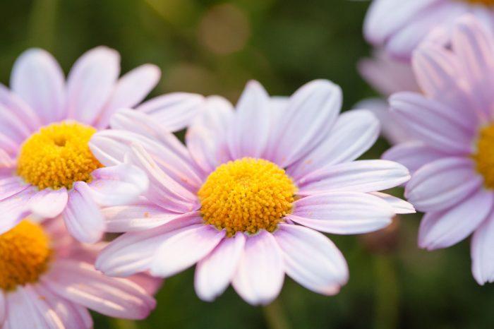 Tuinieren bij bloemfoto's