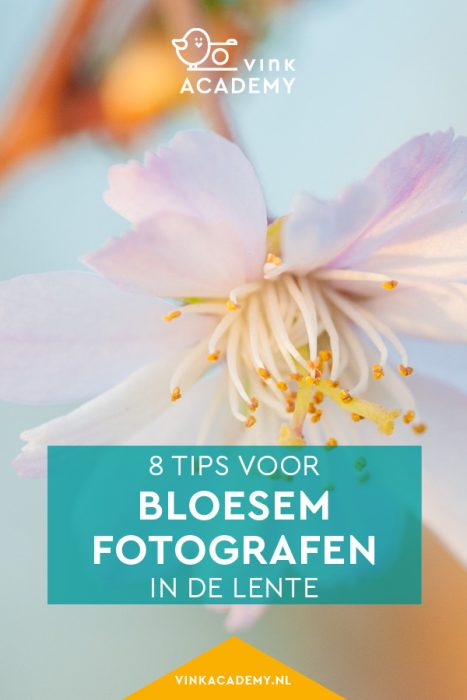 Tips voor het fotograferen van bloesem