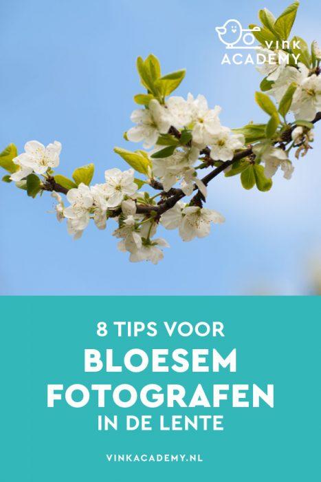 Het mooiste van de lente: bloesem fotograferen