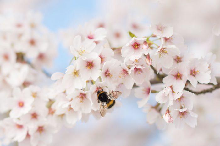 Waar de bloemetjes zijn, zijn de bijtjes :)