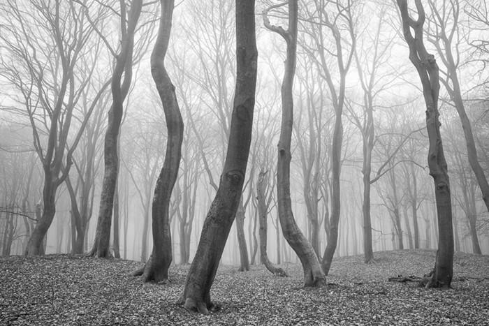 Sprielderbos, © Andre Ruiter