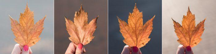 Bruine herfstbladeren