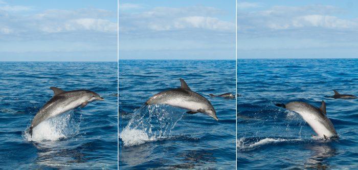 Door de burstmodus kon ik deze springende dolfijn goed fotograferen!