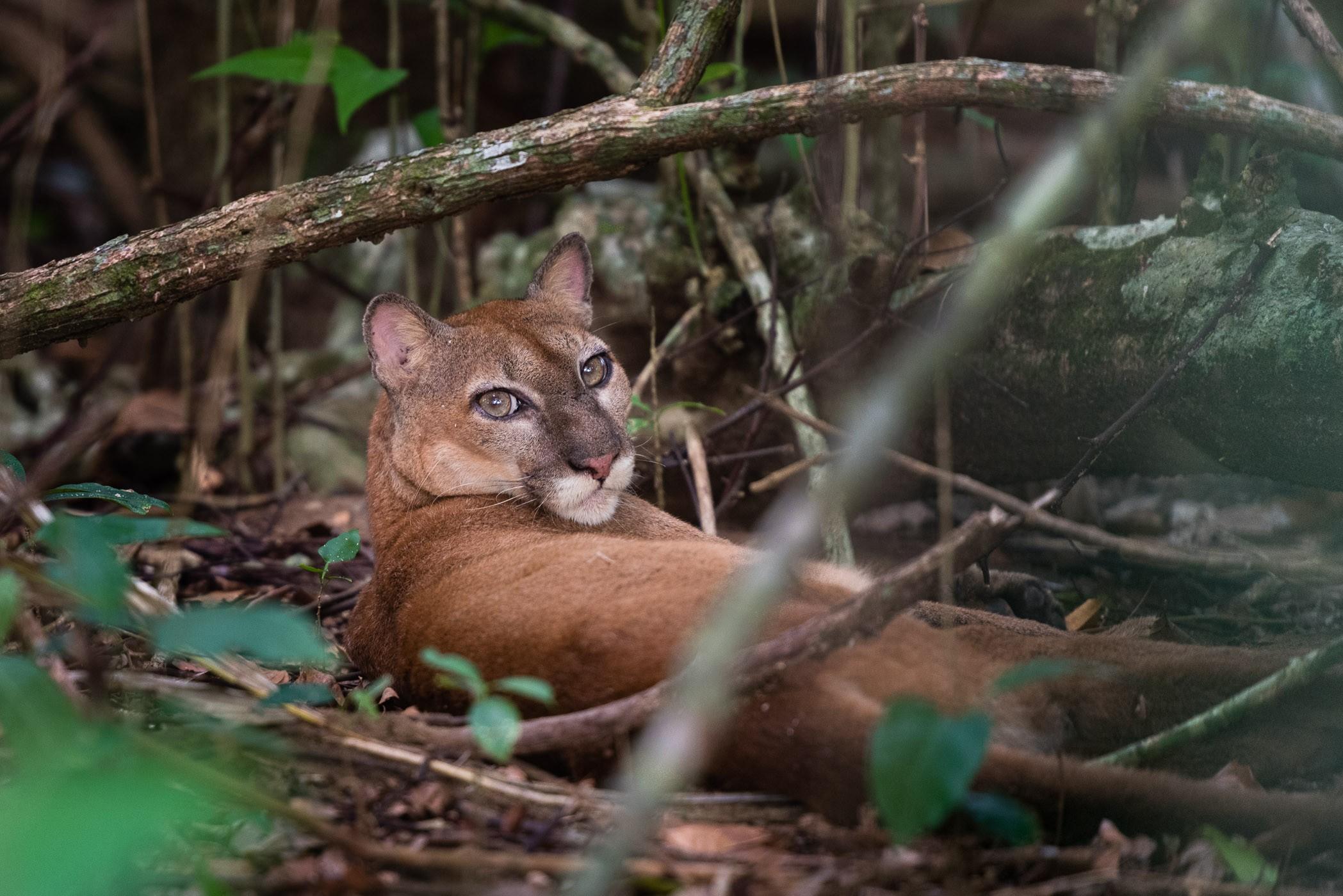 Wildlife fotografie: een kwestie van geluk? • Vink Academy