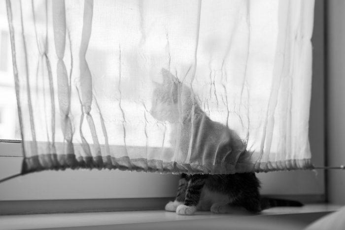 Let bij het fotograferen van je huisdier of er geen storende elementen in beeld staan. Doordat die hier ontbreken, krijg je een hele rustige foto.