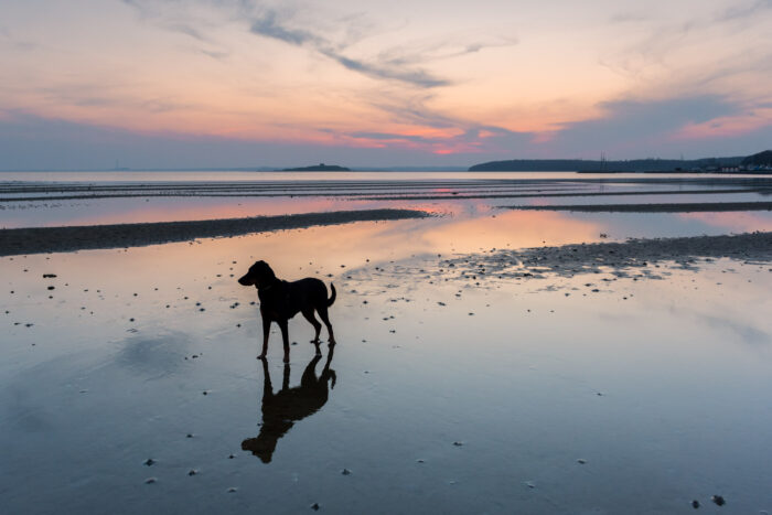 Silhouet van zwarte hond op het strand bij zonsondergang