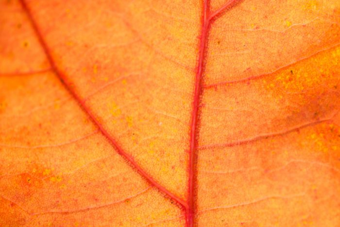 Close-up van een herfstblad