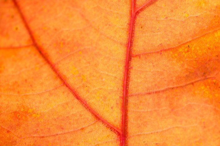 Close-up van een herfstblad