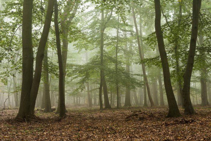 Mist fotograferen in het bos