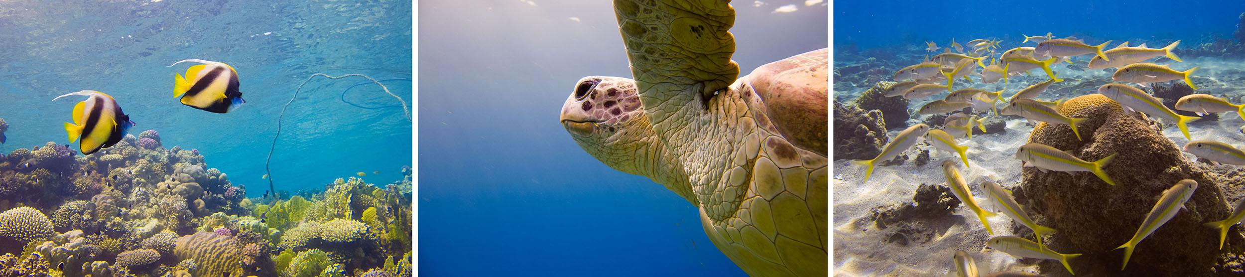Drieluik onderwaterfotografie