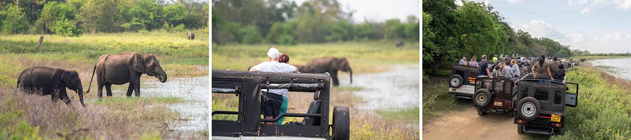 Drieluik van safari: olifanten in Sri Lanka