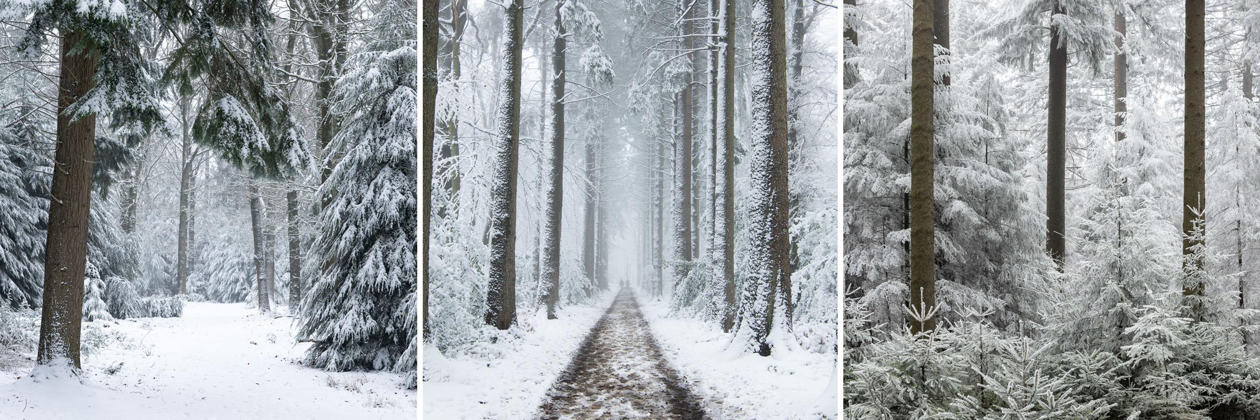 drieluik besneeuwde bossen