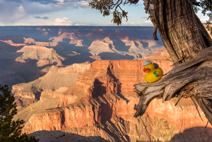 Ducky bij de Grand Canyon