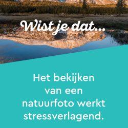 Wist je dat? Het bekijken van een natuurfoto werkt stressverlagend.