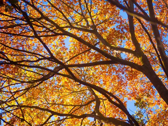 In de herfst vind je prachtige herfstkleuren boven je hoofd