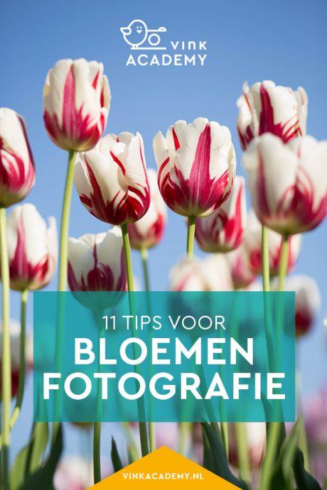 11 tips voor tulpen fotograferen