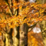8 tips voor het fotograferen van de herfst
