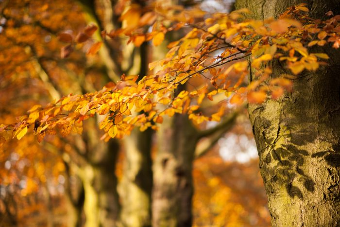 Detailfoto van de herfstbladeren