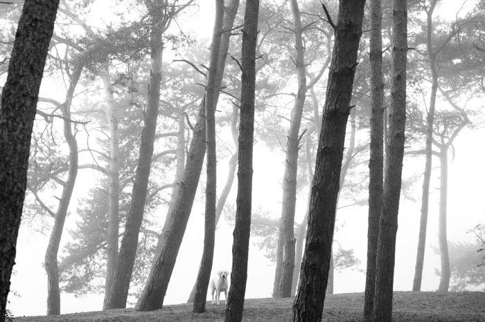 Fotograferen in de mist. Luister niet naar het advies dat je met slecht weer beter binnen blijft.