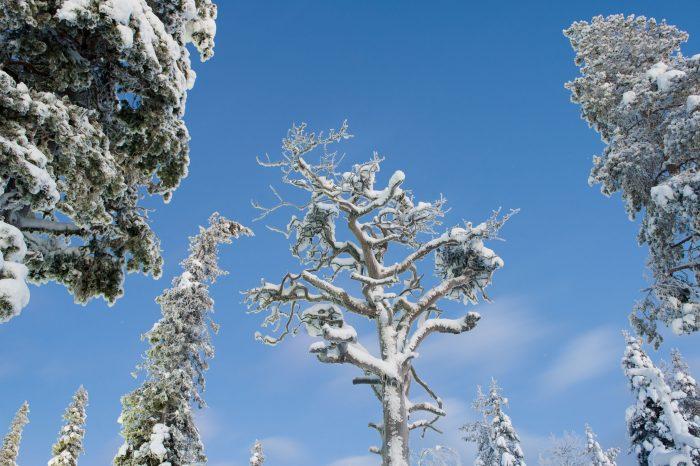 De besneeuwde takken steken mooi af tegen de blauwe lucht tijdens het blauwe uurtje.