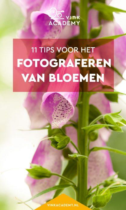 Fotografietips voor bloemen