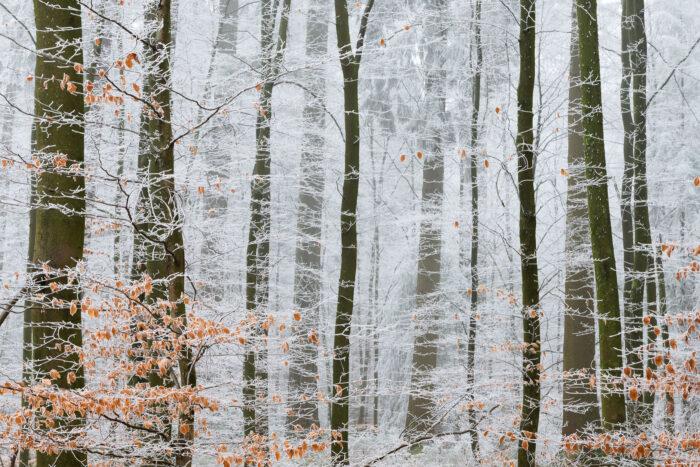 Bomen met rijp op de takken en nog wat oranje herfstbladeren