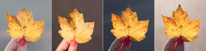 Gele herfstbladeren
