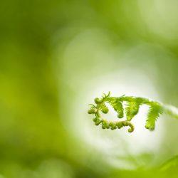 groen-298