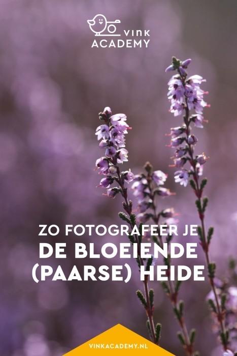 Zo fotografeer je de bloeiende heide