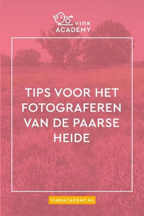 Tips voor het fotograferen van de paarse, bloeiende heide