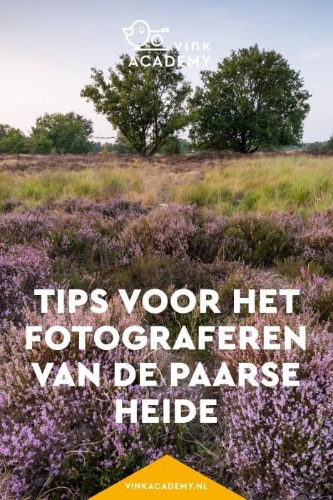 Heide fotograferen: wanneer bloeit de heide