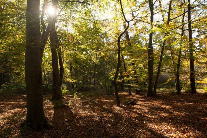 Tegenlicht in het bos