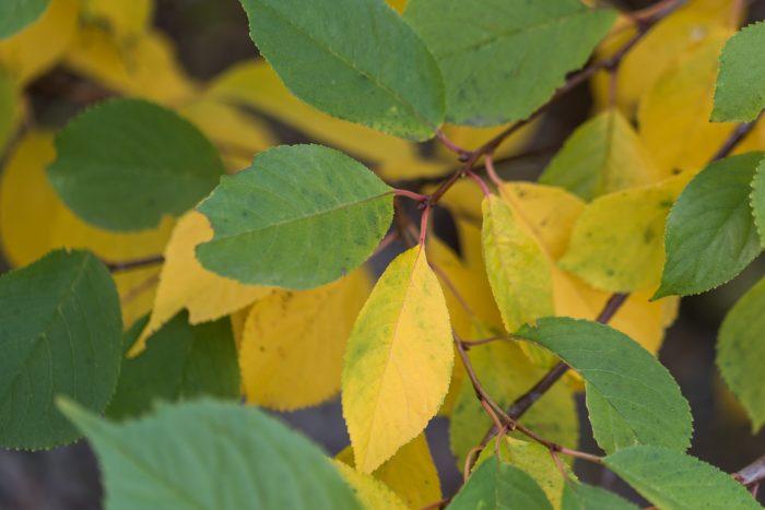 Het herfstgevoel komt nog niet echt over in deze foto omdat er nog zoveel groene bladeren in beeld staan.
