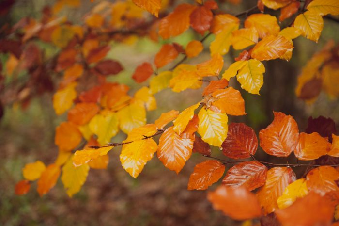 De herfstbladeren vormen een mooi kleurenpalet van geel, oranje en rood in deze foto!