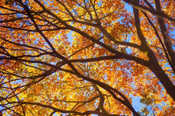 De kleur van de herfstbladeren komt goed naar voren tegen de blauwe lucht. Door te fotograferen met een kikkerperspectief, worden onrustige elementen buiten beeld gehouden.